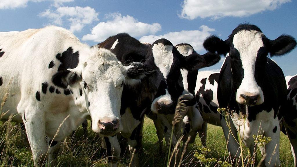 Плиты для животноводства